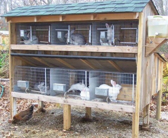 Pin by marketing expert on dog breeder setup pinterest for Rabbit hutch ideas