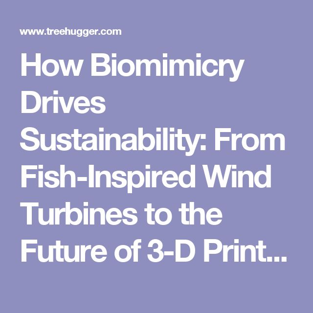 How Biomimicry Drives Sustainability: From Fish-Inspired Wind Turbines to the Future of 3-D Printing (Video) : TreeHugger