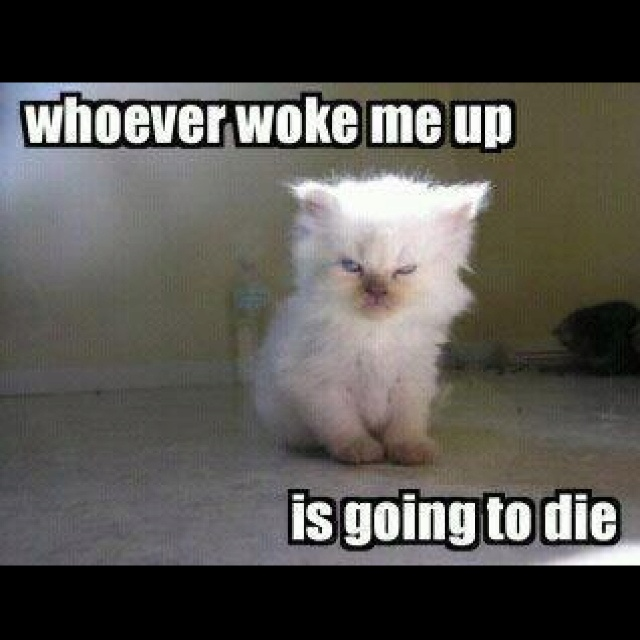 This is my exact face when somebody wakes me up.