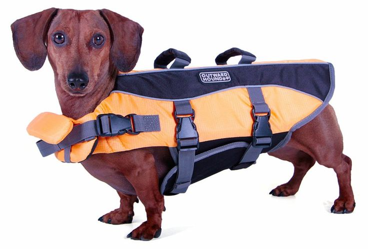 FurBall: Products · Water safety · Outward Hound life jacket (new model)