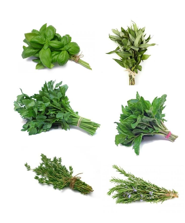 Herbs @ Care For Smiles