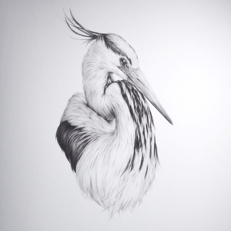The Heron by Vanessa Foley Part of 96 Editions flock series. Limited edition pigment ink giclée print. 45cm x 61cm. Deckled Edge Hahnemühle Fine Art Photo Rag 308gsm. Signed and numbered by the artist. Authenticity stamped by 96 Editions. http://art.96editions.com/shop/collections/flock/i/the-heron-vanessa-foley-art/ -- art.96editions.com #art #artwork #drawing #vanessafoley#96editions #artgallery #limitededition #heron #bird #stability