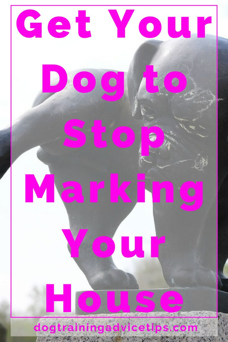 Get Your Dog to Stop Marking Your House   Dog Training Tips   Dog Obedience Training   Dog Training Ideas   http://www.dogtrainingadvicetips.com/get-dog-stop-marking-house