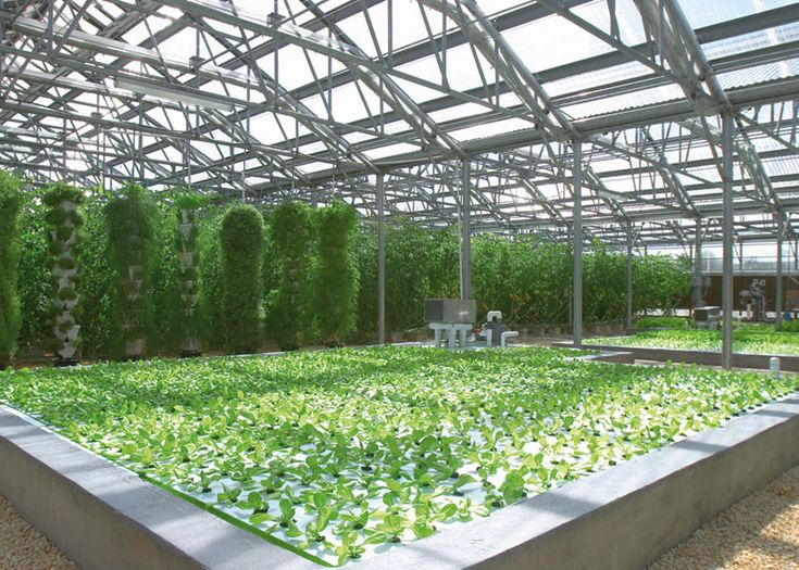 Cuisinart Resort hydroponic farm