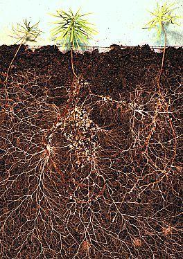 Mycorrhizal Fungi Price : AU$93.50 (inc GST) AU$85.00 (exc GST)