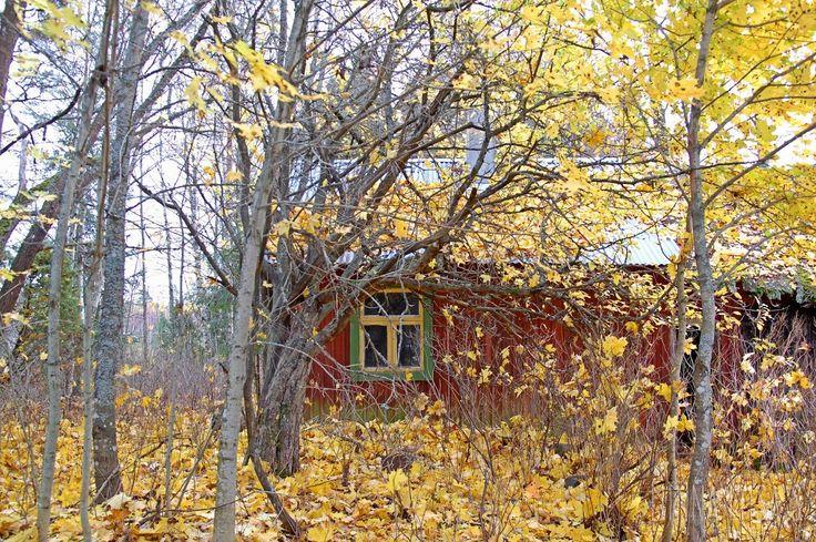 October  2014. Panelia, Finland.
