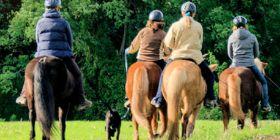 GELÄNDETRAINING  Das Gelände ist ein idealer Trainingsort um Pferd und Reiter auszubilden. Neben Dressurarbeit, wie auf dem Platz, bietet es viele weitere Möglichkeiten um das Pferd zu gymnastizieren sowie dessen Kraft und Balance zu trainieren.