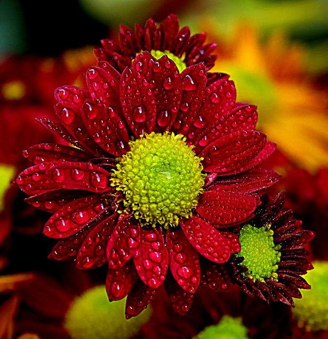 Flowers photo by Biljana Nikolic