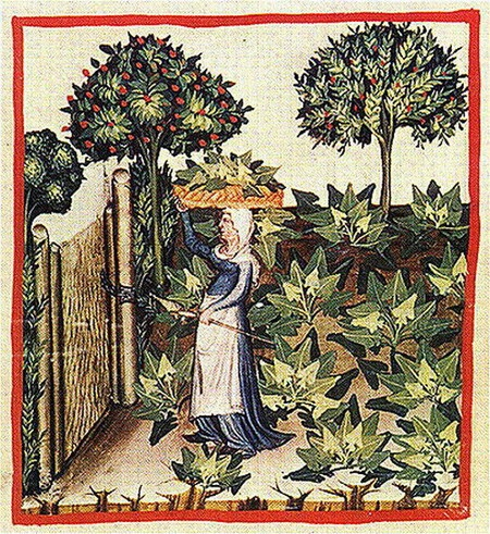Woman with spindle and distaff fetching spinach. Tacuinum sanitatis, 14th century