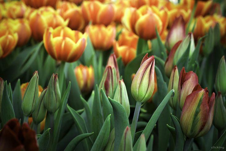 https://flic.kr/p/qZH95Q | Spring is coming