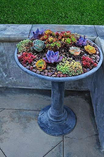 Birdbath As Succulent Container Garden More