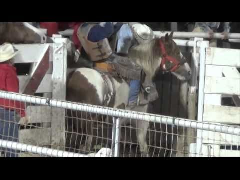 118 Best Boycott Rodeo Images On Pinterest Animal