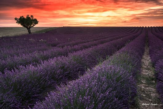 Sunset in Valensole, Valensole Plateau, France