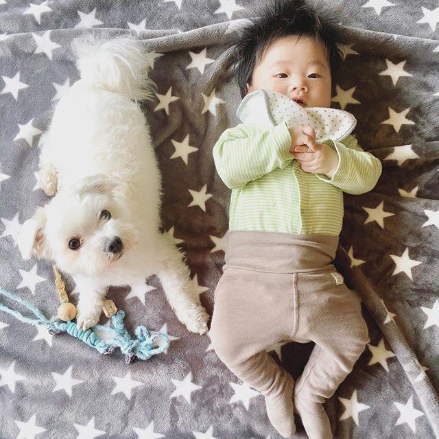 ⚓︎ おとうと君に身長抜かされても 堂々とお兄ちゃん顔のましろ兄さんですU`ꈊ´U ⚓︎ #犬 #愛犬 #マルチーズ #癒しわんこ #ふわもこ部 #pecoいぬ部 #Maltese #baby #cute #kawaii #3ヶ月 #男の子 #男の子ママ #新米ママ #kaumo #赤ちゃん #ママリ #コドモノ #inumatome #ベビフル #ベビリトル #コドモダカラ #コノビー #mamanokoカメラ部