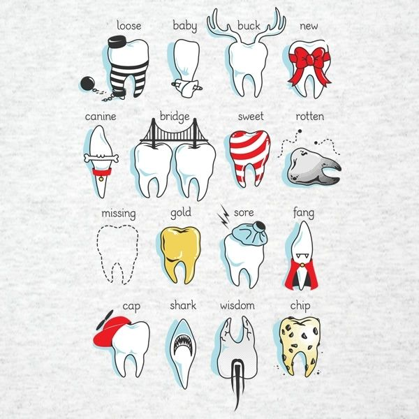 Tooth types, I find this funnier then it was intended.