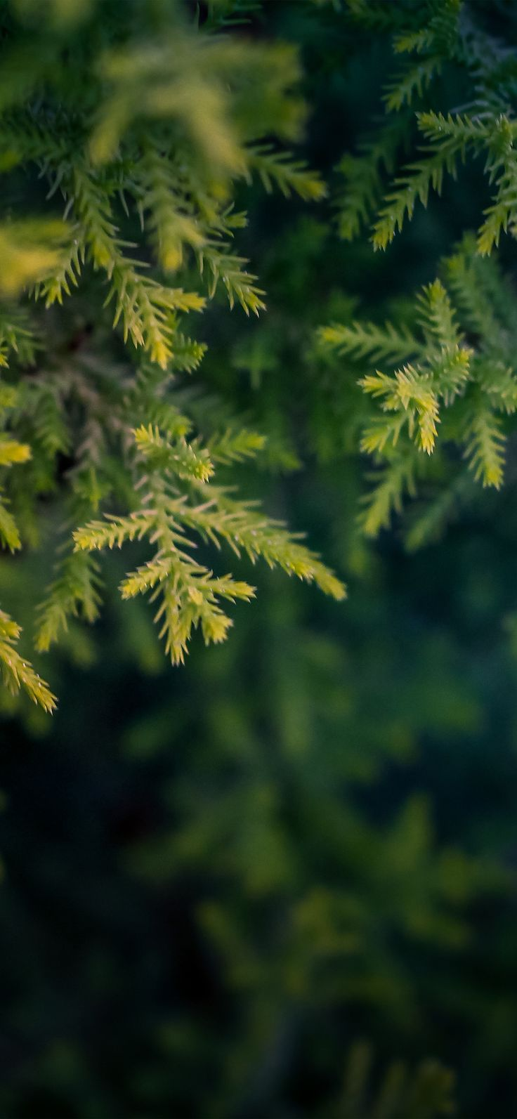 nv71-tree-leaf-bokeh-green-nature via http://iPhoneXpapers.com - Wallpapers for iPhone X