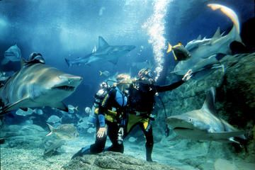 Shark Dive Experience at SEA LIFE Melbourne Aquarium (with Photos) - Melbourne