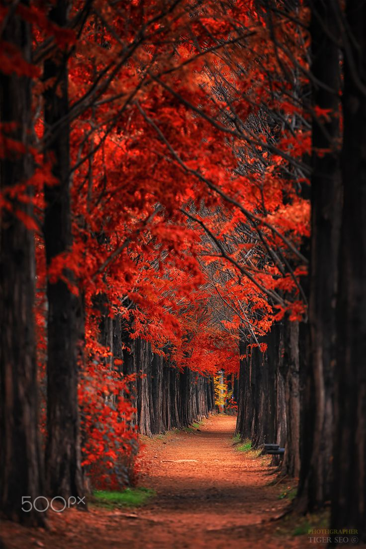 ~~Red road | autumn after the rain, Korea | by Tiger Seo~~