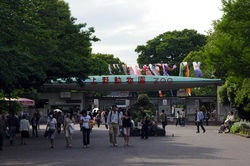 Ueno Zoo. I didn't go here as often as I should have but have wonderful pictures of Chase outside of it at Ueno Park.