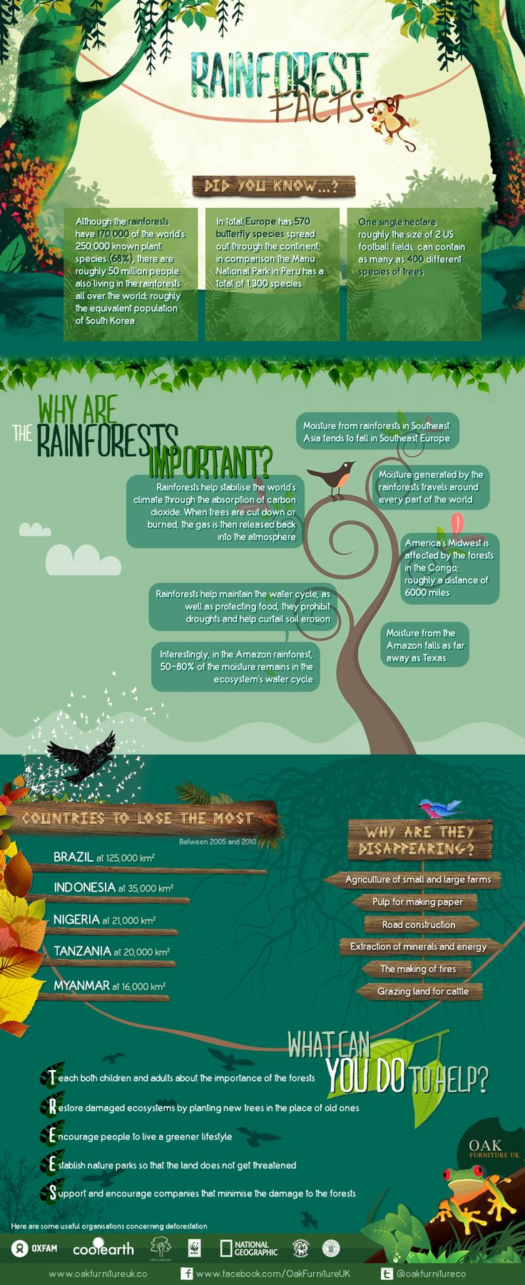 Rainforest Facts from Oak Furniture UK: http://www.greenerideal.com/science/0423-rainforest-facts-infographic/ #rainforest