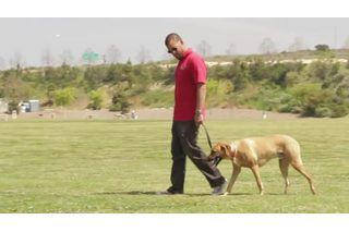 How to Stop a Dog From Peeing When Excited   eHow
