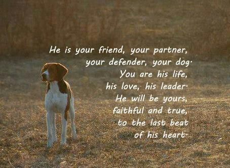 Coonhound love! gotta love hounds ! when God made them He smiled and knew they were good