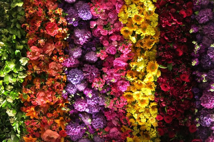 A wall made entirely of flowers made for the BAFTA TV awards at the Grosvenor House. Flowers and design by Rebel Rebel Florist. www.rebelrebel.co.uk