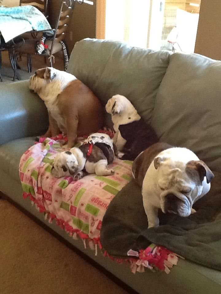 This is too adorable. Family of bullies.