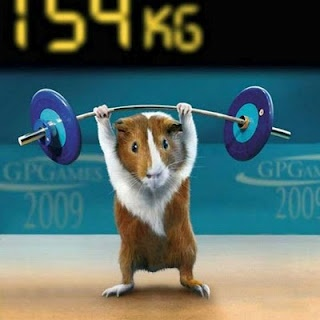 cause everybody needs a picture of a hamster lifting weights on their fitness board