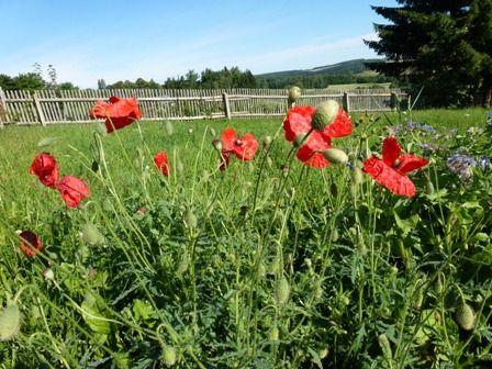 Gartengestaltung - Blumenwiese anlegen und pflegen - im Garten Wildblumen, Kräuter und Gräser aussäen - Wildblumenmischung