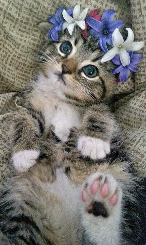 Cue Kitten With Images Super Cute Kittens