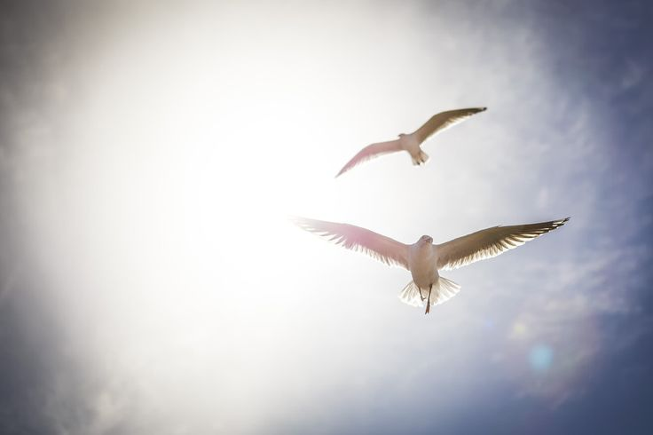 fly towards the sun by Luis Lui on 500px