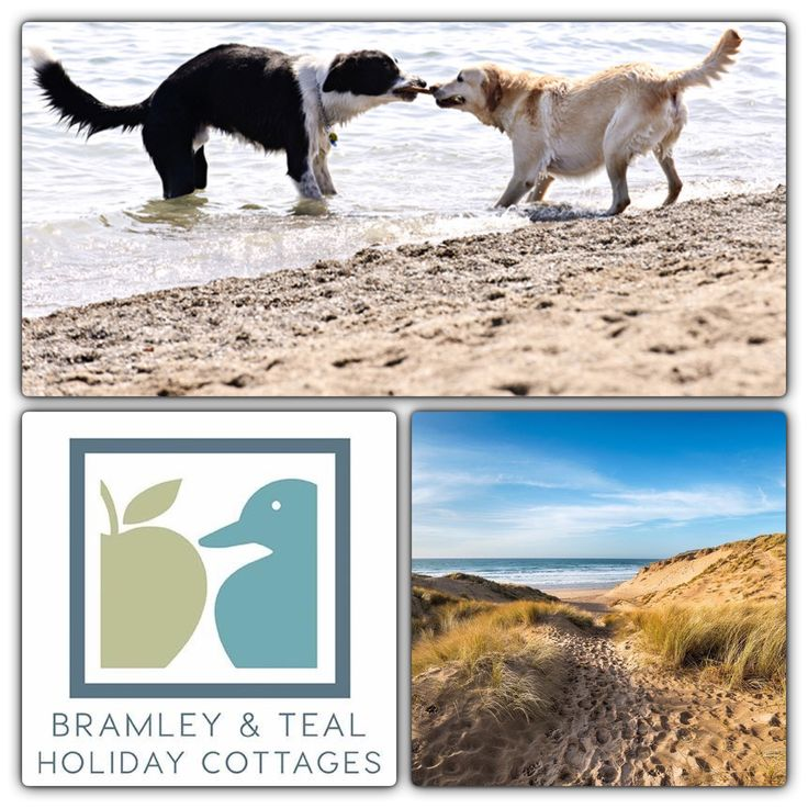 Bramley and Teal have a fabulous selection of dog friendly accommodation amidst the beautiful Sussex and Kent countryside