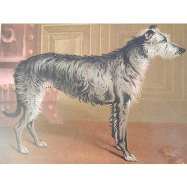 Check out this item at One Kings Lane! 1880s Cassell's Scottish Deerhound