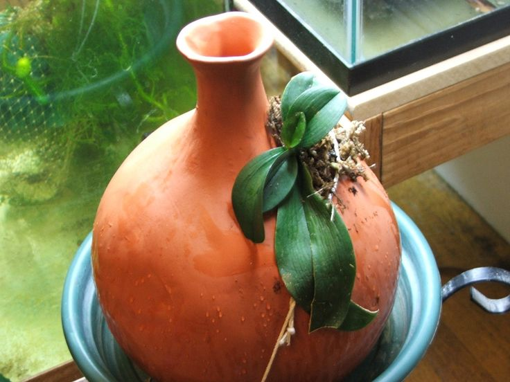 Mounting On Clay Pots – Orchid Forum Orchid Care regarding Clay Orchid Pots-  Clay Orchid Pots | AMENagement-lego.com