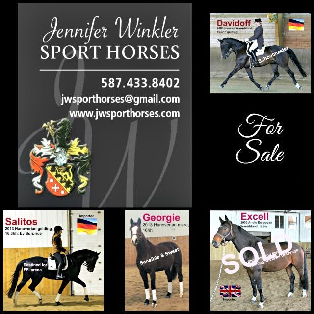 German Trained Dressage Professional. Horse Sales Group , Trainer, Coach, Clinician. Jennifer Winkler Sport Horses - Sales Horse Group