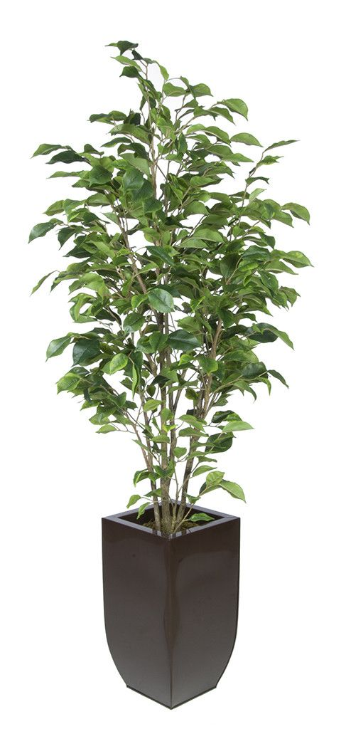 Artificial Green Ficus in Tapered Zinc