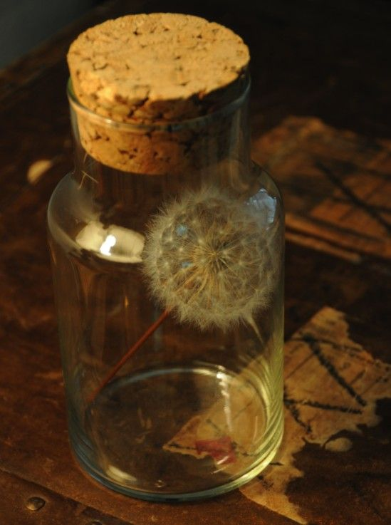 dandelion wish in a jar - love the idea, not sure who for!