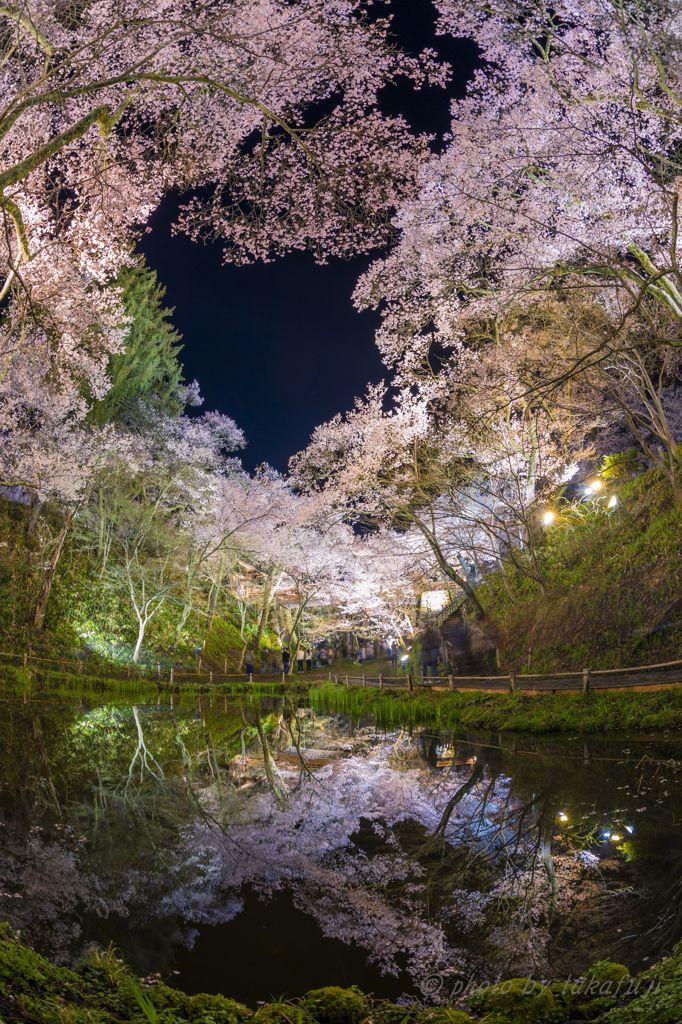 Takato Castle Ruins Park, Nagano, Japan #桜 #CherryBlossom