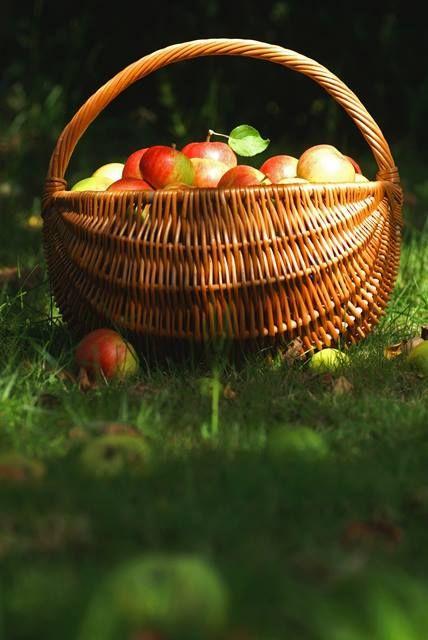 Herfst oogst - appels