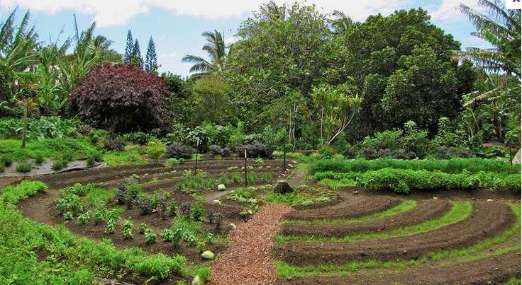 Bonjour à tous, voici une excellente fiche pratique du site Wikihow que je viens de décourvrir : http://fr.wikihow.com/d%C3%A9marrer-un-potager-en-permaculture C'est le moment de s'y mettre non ? Un potager en permaculture est conçu de manière à imiter...