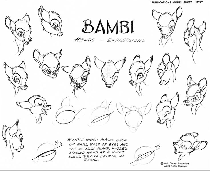 walt disney sketch of bambi from bambi hd wallpaper and background photos of walt disney sketches bambi for fans of walt disney characters images