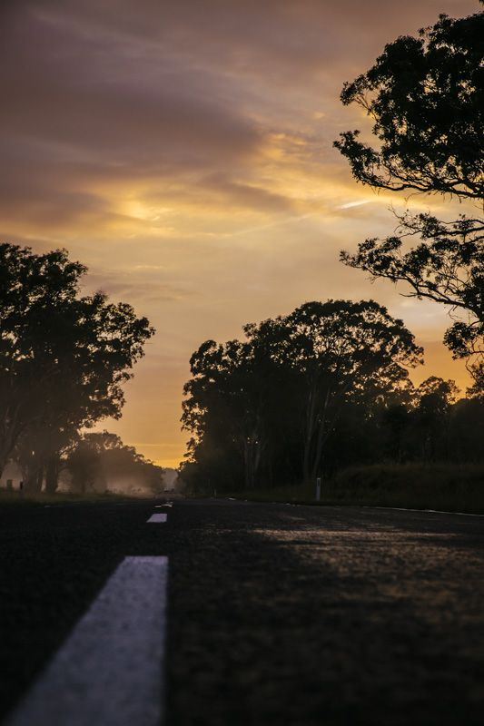 Sunrise - bush - highway - mist
