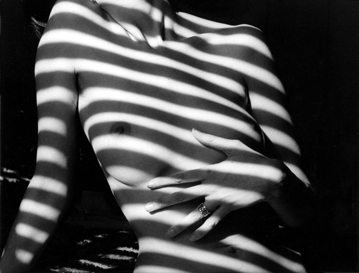 med_02-zebra_torso-jpg