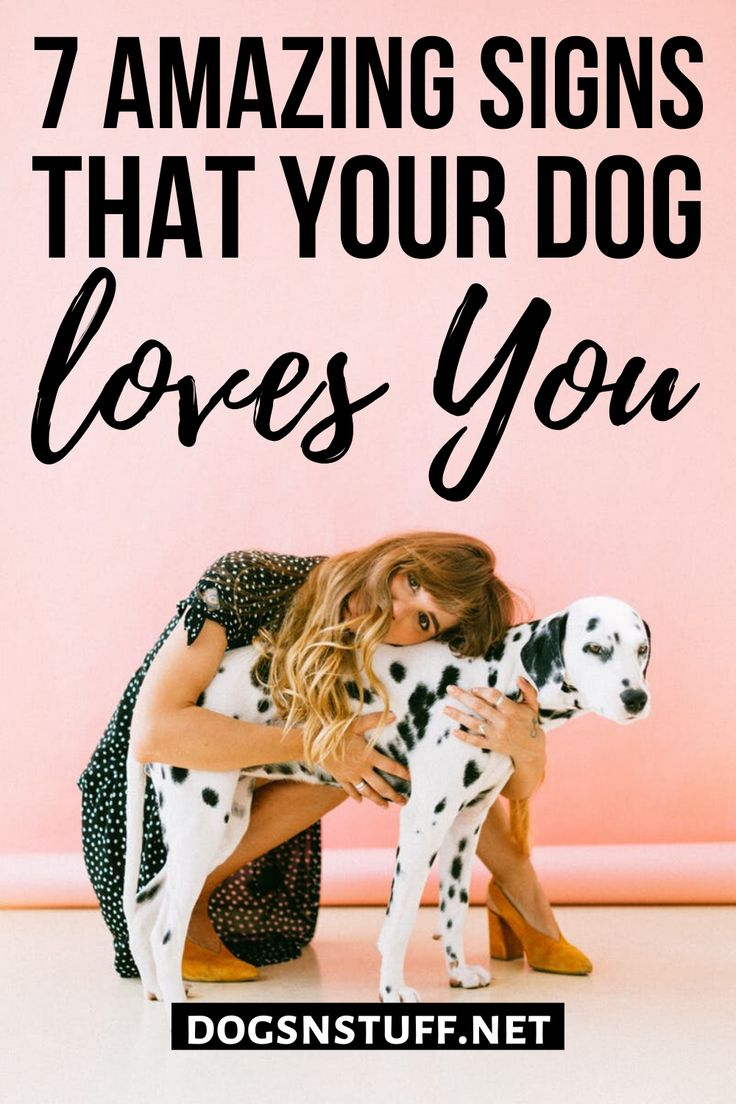 7 amazing signs your dog loves you do dogs smile