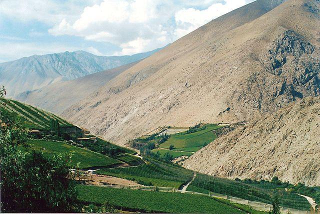 Vineyards in Elqui Valley