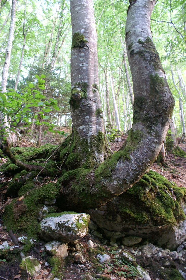 Prachtige plek, bos bij het meer van Annecy.