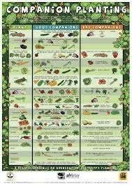 companion planting - Google Search