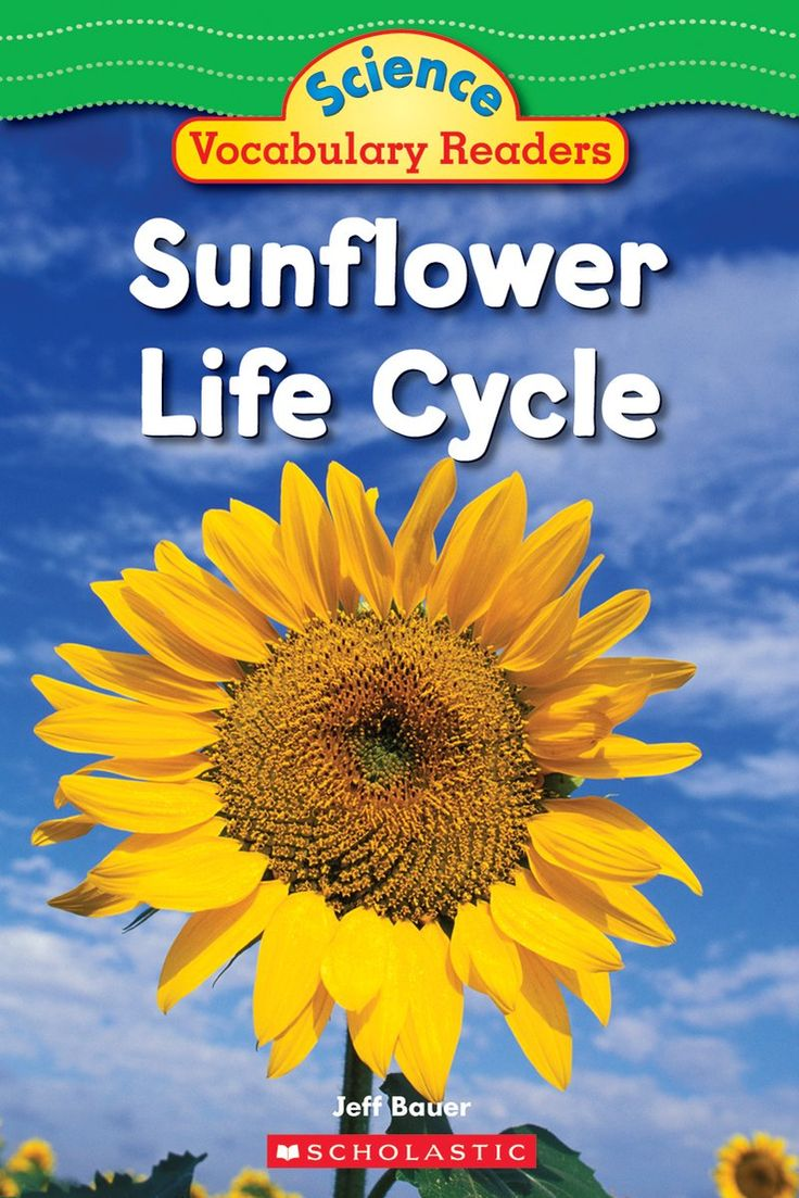 In this book, learn how sunflowers grow.