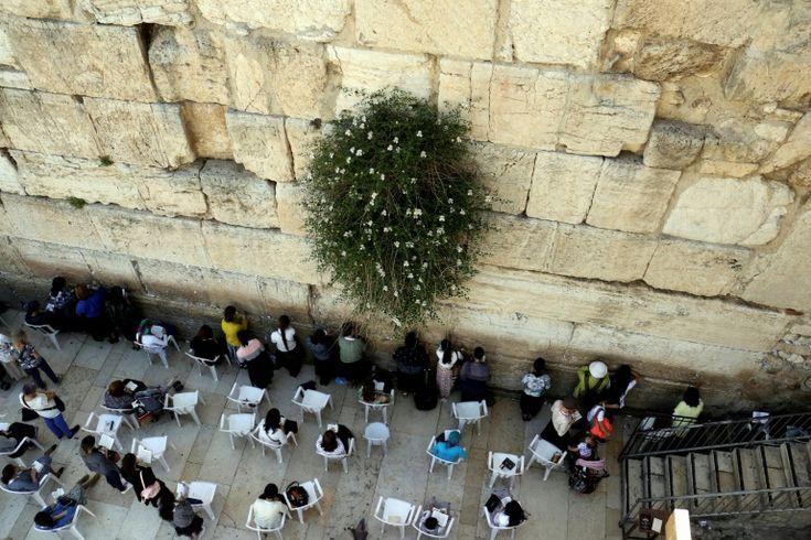 i24NEWS - Un responsable de l'AP reconnaît le lien entre le judaïsme et le Mur occidental